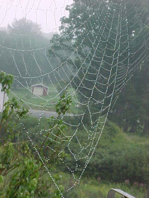 picture of a dew-covered spider web