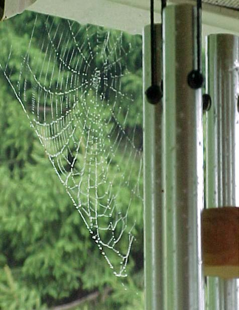 picture of dewy spider web on my windchimes