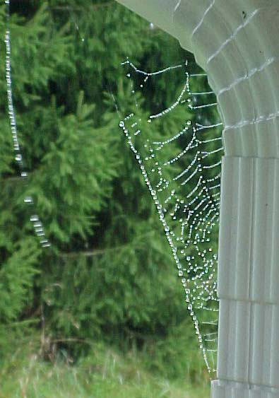 picture of dewy spider web on the downspout