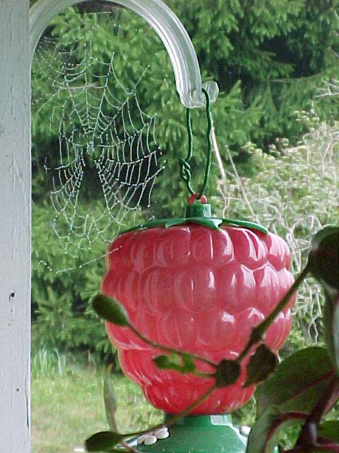 picture of dewy spider web on my hummingbird feeder